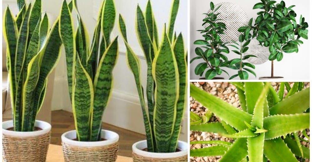 7 plantas que absorben el calor y purifican el aire de tu casa