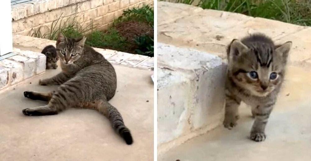 Una gata sin hogar se hace amiga de una pareja y aparece en su casa con su bebé