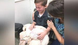 Un niño adoptado abraza a su perrita enferma para que jamás se sienta sola