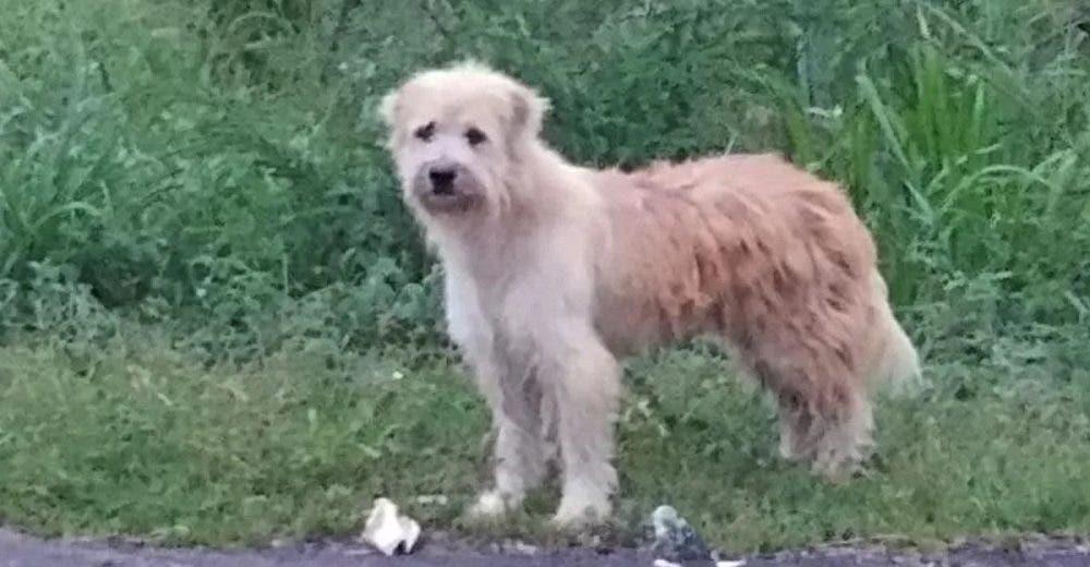 Un perrito espera durante 4 años a su familia en la carretera en la que se perdió