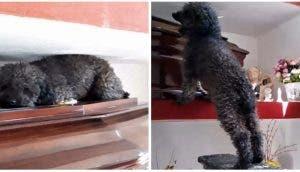 Este perrito no quiere despegarse del ataúd de su dueña aunque ya pasaron más de 4 años