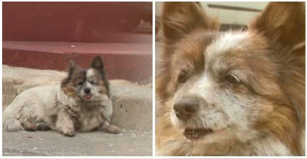 Una leal perrita espera desde hace 10 años a los dueños que un día le dijeron «quédate aquí»
