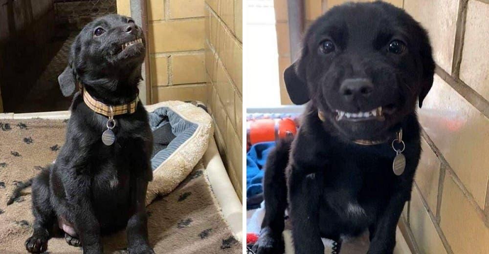 Un perrito sonríe agradeciendo a quienes lo rescataron cuando estaba en una perrera