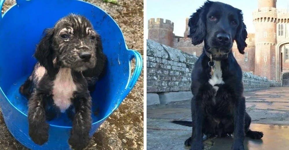 Un cachorrito olvidado entre la basura ahora es un gran rastreador policía