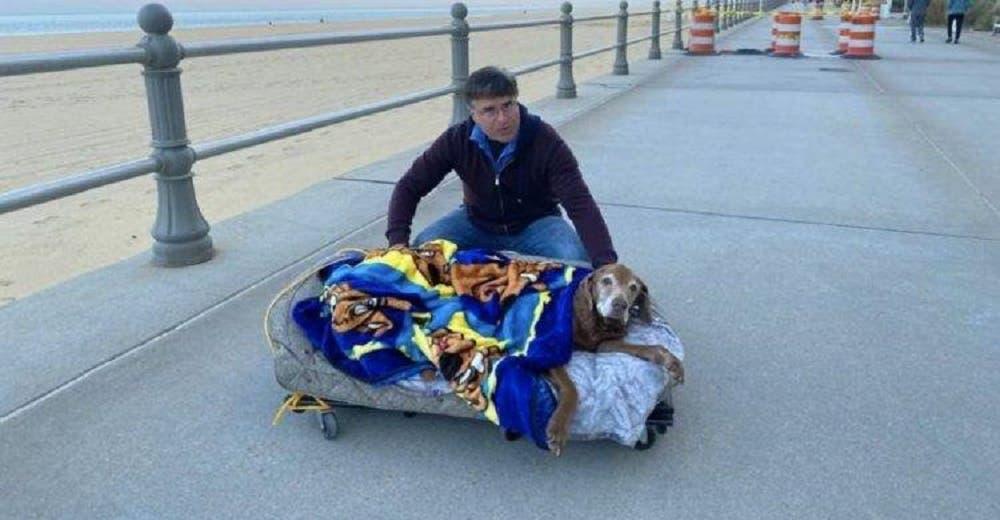 Construyen una cama móvil para que su perrita mayor pueda seguir paseando