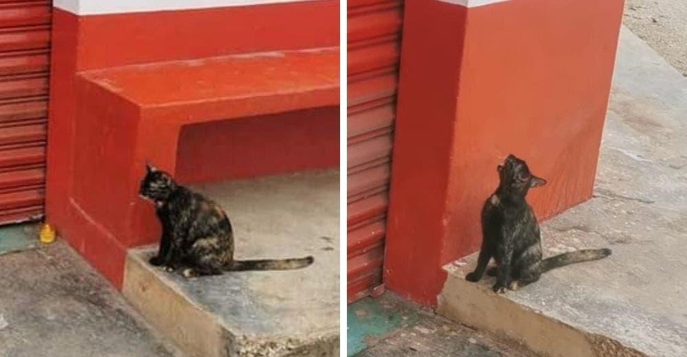 Una gatita que no sabe que su amigo ha muerto maúlla desesperada para que le abra la puerta