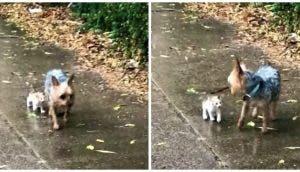 Perrito rescata al gatito callejero que encontró bajó la lluvia y lo invita a irse con él a casa