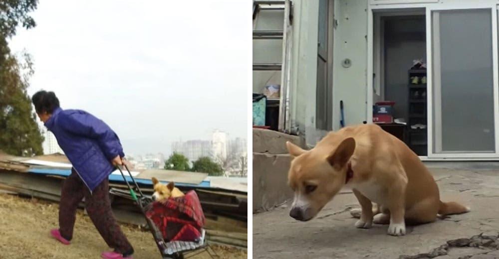 Una abuelita rescató a un perrito paralizado que fue dejado solo entre la basura