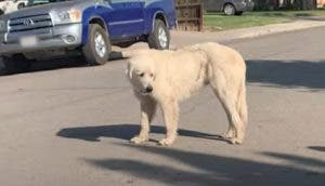 Rescatan al temeroso perro que desde hace un año se negaba a aceptar ayuda