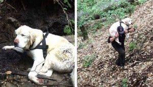 Perrita ciega es rescatada en el bosque después de 8 días desaparecida