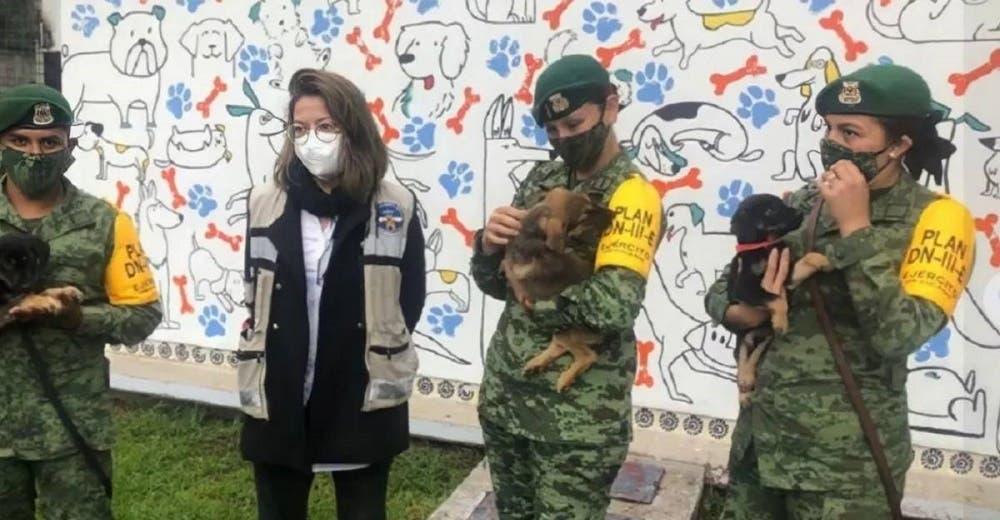 Un aeropuerto abre un refugio para proteger a todos los perritos callejeros