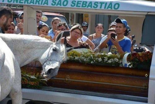 Caballo llega al funeral de su mejor amigo humano