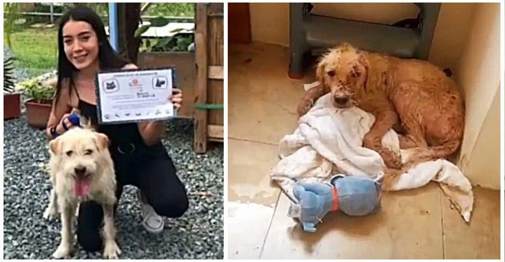 El perrito al que echaron agua hirviendo finalmente encuentra un hogar donde es muy feliz