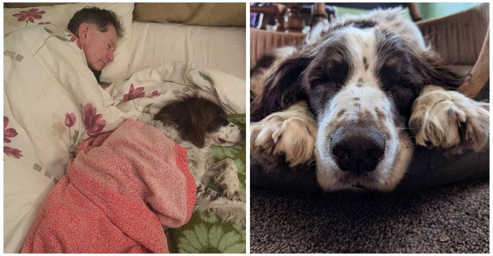 Un perrito sufre un derrame cerebral y su dueño duerme con él para no dejarlo solo