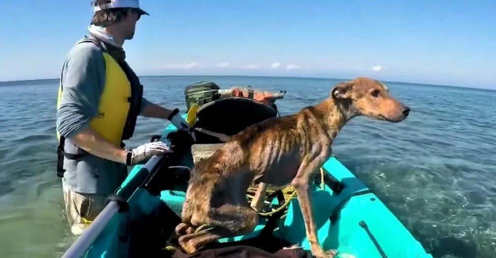 Fotógrafo encuentra a un perrito abandonado en una isla desierta y no duda en rescatarlo