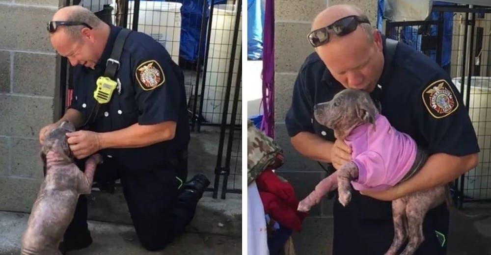 Un bombero salva a una perrita pitbull amarrada a un árbol y después la adopta