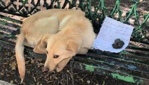 Rescatan al perrito que fue dejado con una nota en un parque pidiendo un buen hogar
