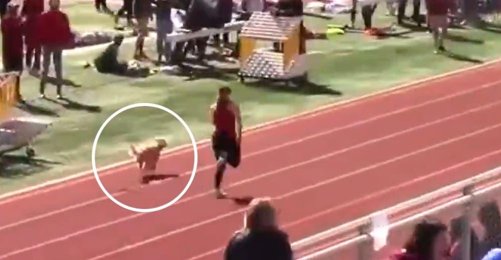 Una perrita se infiltra en una carrera y gana el primer lugar