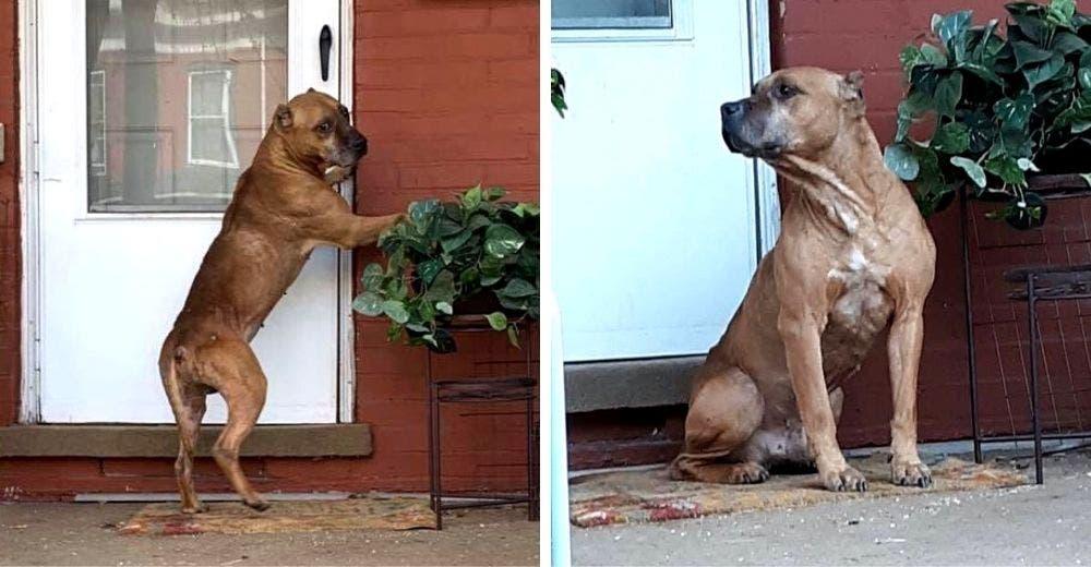 Un perro abandonado en una mudanza espera fuera de la casa durante 2 semanas a su familia