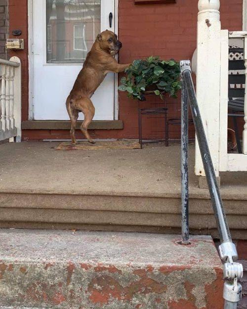 Perro fue olvidado cuando su familia se mudó de casa pero esperó su regreso
