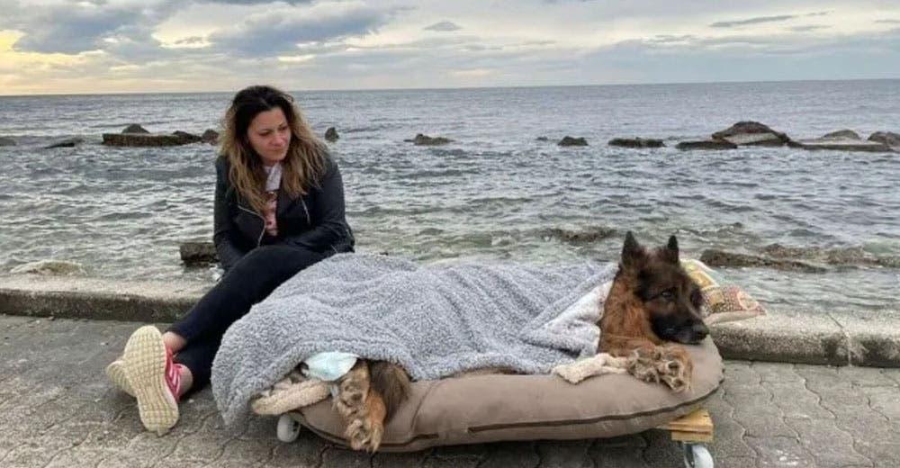 Un perro con parálisis es llevado al mar antes de morir, sus dueños lo dejaron solo