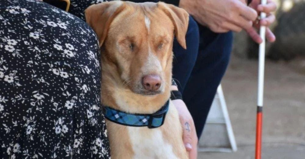Hombre ciego adopta a un perrito que perdió la vista a causa de la indiferencia de sus dueños