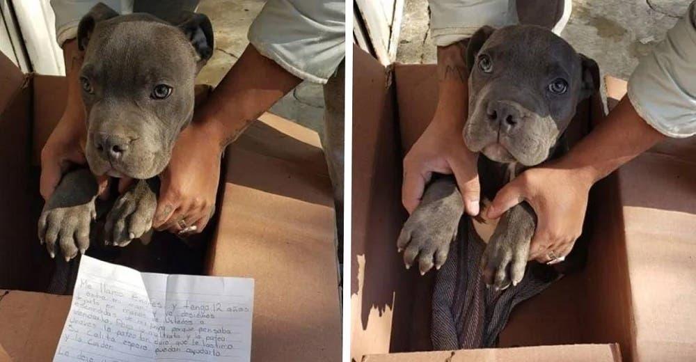 Un niño de 12 años lleva a su perrito a un refugio para salvarlo del trato injusto de su padre