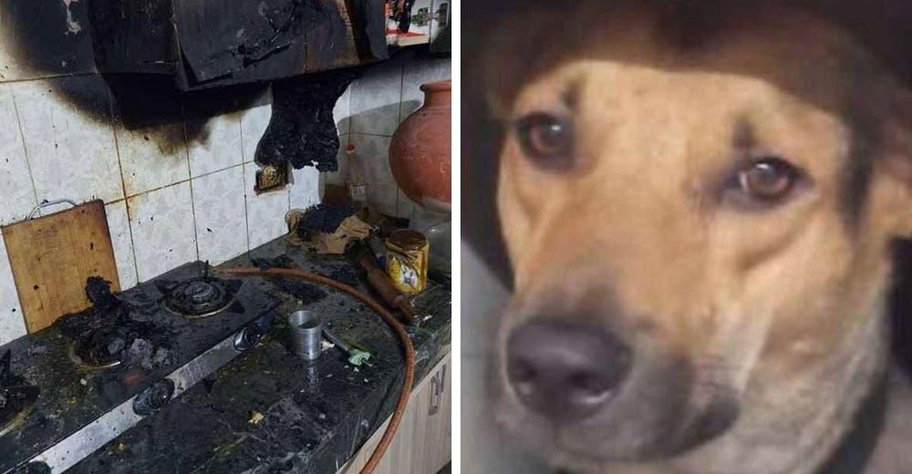 Un perrito devuelve el favor a la familia que lo adoptó y les salva la vida en un incendio