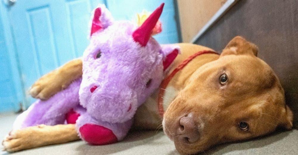 El perrito callejero que fue descubierto intentando robar un unicornio de peluche consigue hogar