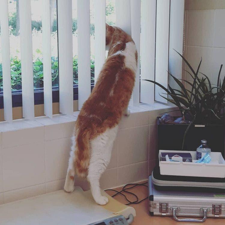 Gato encuentra gatito desamparado y hace que su familia lo adopte